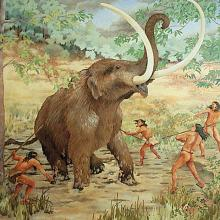 Early man hunted mastodon that roamed during the last Ice Age.  The Mastodon Hunt. Painting by Carlyle Urello, courtesy of the Tennessee State Museum.